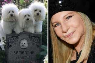 I'm Obsessed With Barbra Streisand's Clone Dogs And Their Very Rich Life
