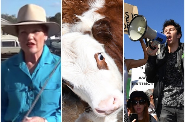 A Far Right Politician Was Suspended From Twitter For Suggesting Cattle Prods Be Used On Protesters