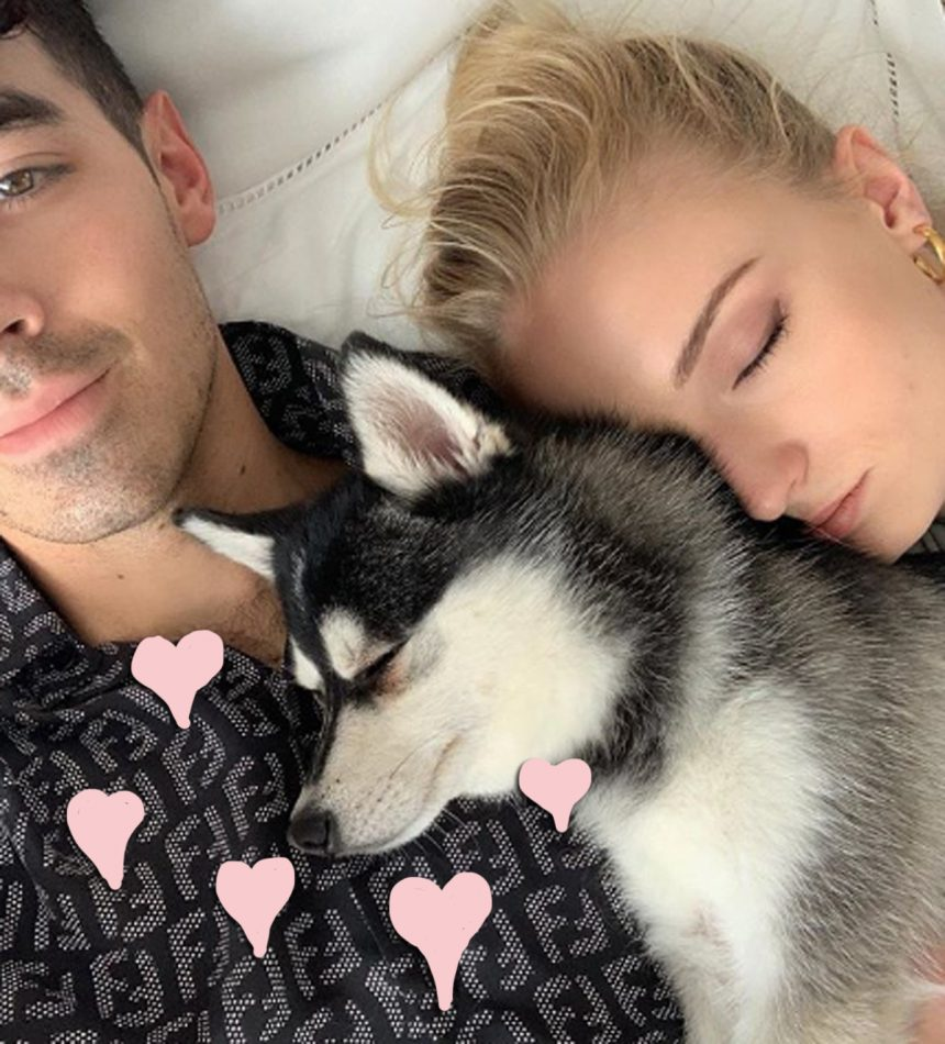 Did Joe Jonas & Sophie Turner Just Add A New Dog To The Family?! Look!