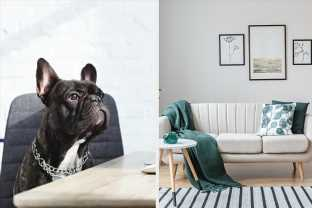 Decorate Your Home And We'll Reveal What Kind Of Dog You Should Have