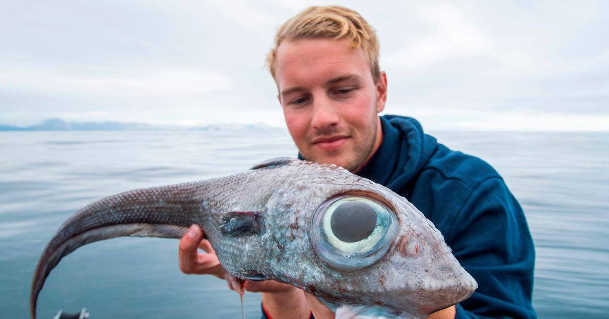 Shocked teenager catches alien-like fish with 'head of lion and tail of dragon'