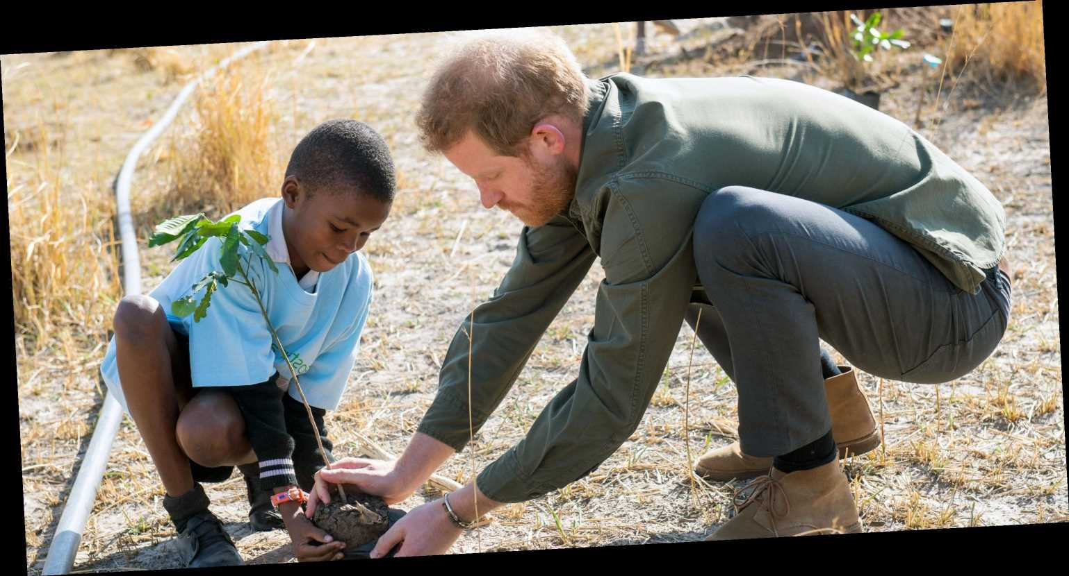 Prince Harry Unveils New Conservation Project in Angola