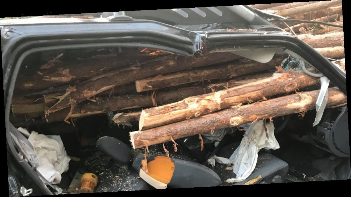 Georgia Driver Somehow Survives 'Final Destination' Crash With Logging Truck