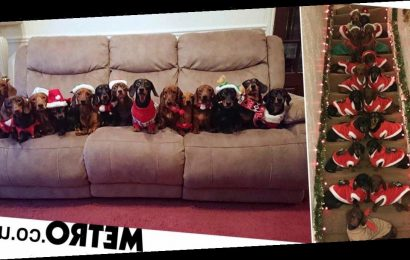 Man lines up his 17 sausage dogs for the perfect Christmas photo