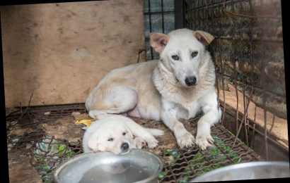 6 Canines from South Korea Dog Meat Farm Rescued Just in Time to Find a Home for the Holidays