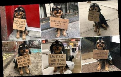 Pup goes viral with cute protest signs about smelly socks and mailmen