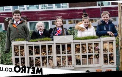 Children create palace for bugs to highlight the importance of insects
