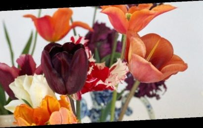 Tulip Harvesting in the Cotswolds With Lily Atherton Hanbury