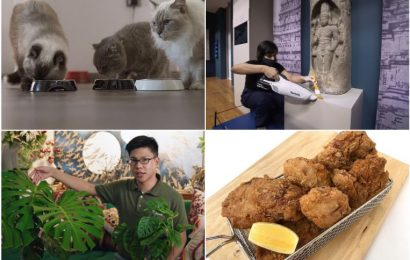 #Stayhome guide for Tuesday: Relax to satisfied purrs of cats, make some fried chicken and more