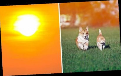 How hot is too hot for cats and dogs?