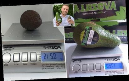 Giant avocados weighing almost 4lbs are hitting supermarket shelves