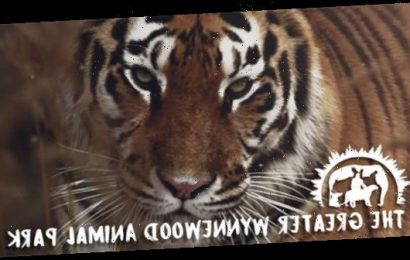 'Tiger King' Zoo is Now Permanently Closed, Jeff Lowe's New Park Will Only Be for TV Production (For Now)