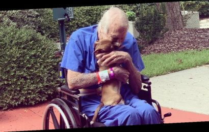 Navy veteran saved by Chihuahua after having a stroke
