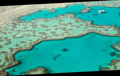 Great Barrier Reef export fishery banned for 'disappointing' failure