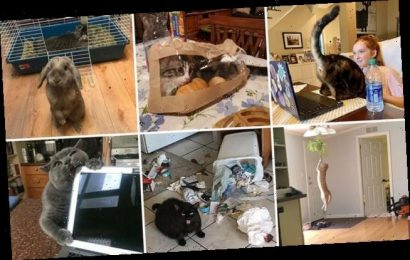 People shared snaps of their cats misbehaving in hilarious ways