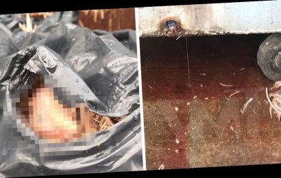NYC Wet Market Fills Dumpster With Chicken Parts Leaking Blood