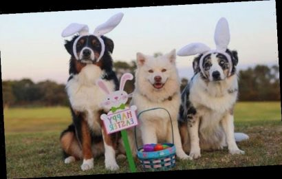 Dog chocolate warning: How to protect pets from fatal Easter chocolate – Tips