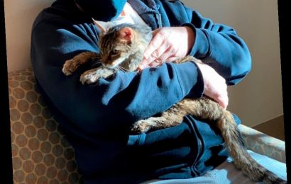 Cat That Went Missing 15 Years Ago Finally Reunites with Her Owner: 'It's Amazing'