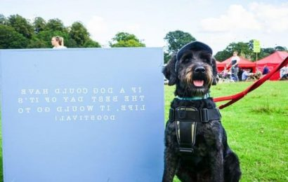 Glastonbury for dogs: Give your pet something to bark about at Dogstival 2021