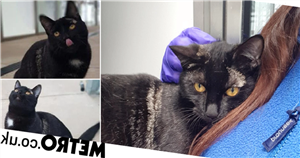 Cat who has been shelter for half her life is desperate to find a new home