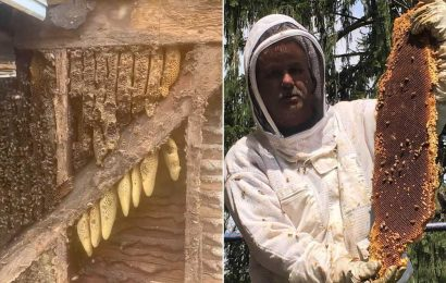 450,000 bees evicted from 35-year home in walls of farmhouse